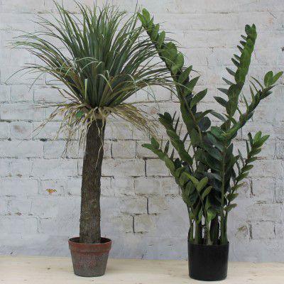 plant only medium