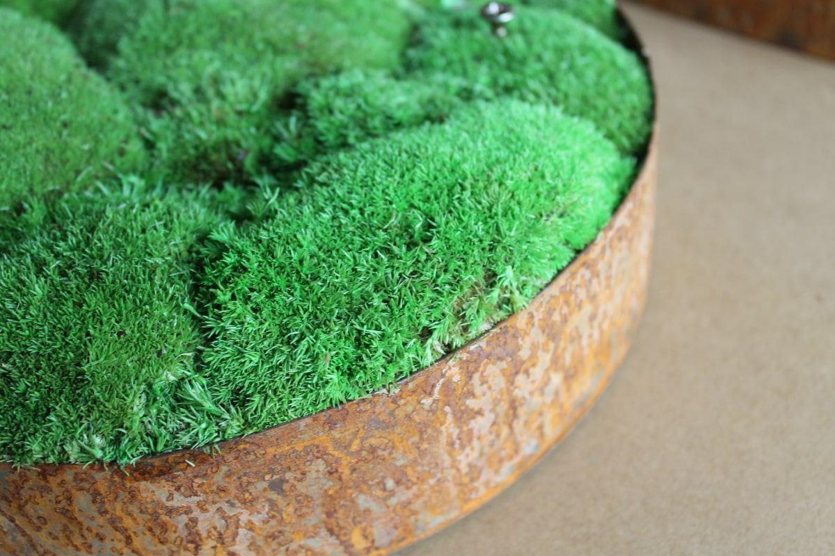Optimized LOCATIONS moss walls min