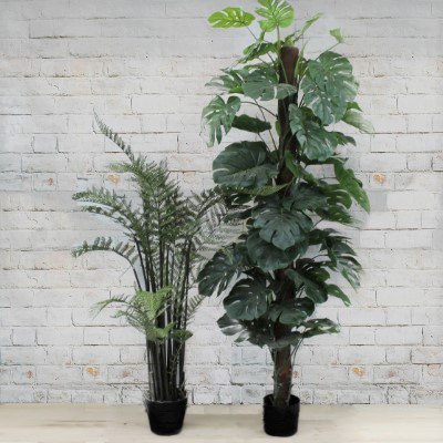 plant only large