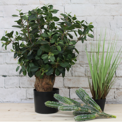 plant only small